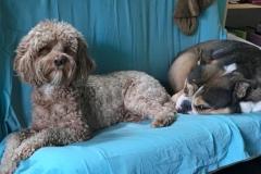 wholistic-pet-service-dog-boarding-2-mushi-moma