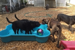 wholistic-pet-service-dog-boarding-2-playtime-at-the-pool-with-sally