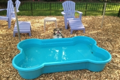 wholistic-pet-service-dog-boarding-6-mushi-king-of-the-pool