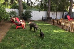 wholistic-pet-service-dog-boarding-6-niki-with-little-dogs-in-grass