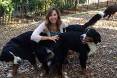 wholistic-pet-service-dog-boarding-berner-collection-3