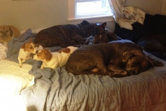 wholistic-pet-service-dog-boarding-doggies-all-over-the-bed
