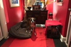 wholistic-pet-service-dog-boarding-img_0067