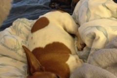 wholistic-pet-service-dog-boarding-img_3859
