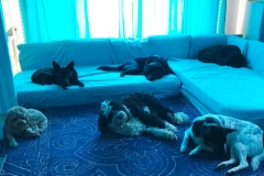 wholistic-pet-service-dog-boarding-sleeptime-in-turquoise-2