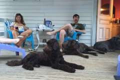 wholistic-pet-service-dog-boarding-will-tally-on-the-deck-with-dogs