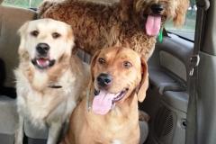wholistic-pet-service-dog-hikes-11