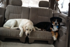 wholistic-pet-service-dog-hikes-4-wylie-piper-in-the-back-seat