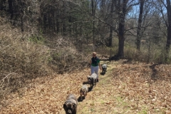 wholistic-pet-service-dog-hikes-7-loukia-on-trail-in-wilton