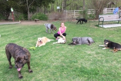 wholistic-pet-service-dog-hikes-8-erica-with-dogs-at-cranbury
