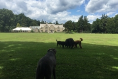 wholistic-pet-service-dog-hikes-9-cranbury-park-with-the-pack
