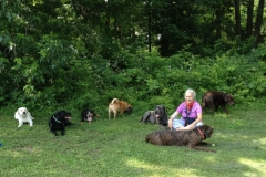 wholistic-pet-service-dog-hikes-calf-pasture-seated-with-dogs
