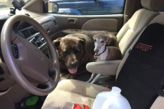 wholistic-pet-service-dog-hikes-grace-with-lucy-in-front-seat