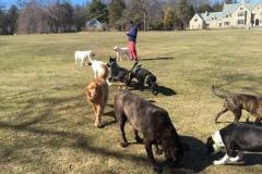 wholistic-pet-service-dog-hikes-img_6049
