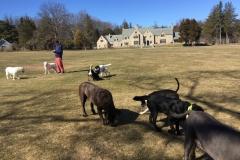 wholistic-pet-service-dog-hikes-img_6050