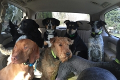 wholistic-pet-service-dog-hikes-img_6058