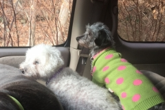 wholistic-pet-service-dog-hikes-img_7576