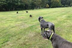 wholistic-pet-service-dog-hikes-img_9422