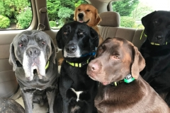 wholistic-pet-service-dog-hikes-img_9425