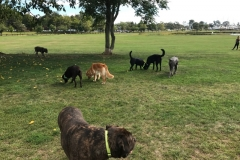 wholistic-pet-service-dog-hikes-img_9428