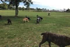 wholistic-pet-service-dog-hikes-img_9429