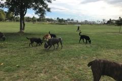 wholistic-pet-service-dog-hikes-img_9430