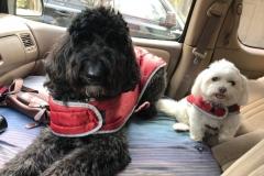 wholistic-pet-service-dog-hikes-sasha-wendy-in-the-dar