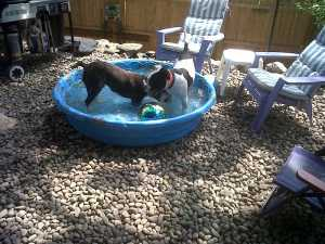 rehab-guests-annie-bugsy-in-the-holistic-resort-paddle-pool