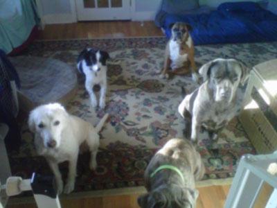 Wholistic-Pet-Service-_0009_Breakfast1