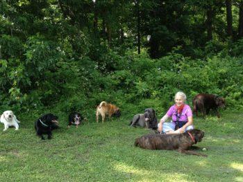 Wholistic Pet Service dog hike at calf pasture in norwalk